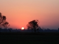 Sunset at Chitwan