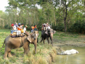 jungel safari