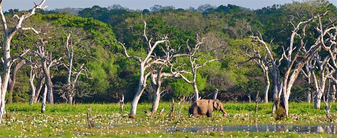 Highlights of Sri Lanka Tour